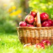 Stock Photo: Organic Apples in the Basket. Orchard. Garden