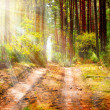 Autumn Forest - Stockfoto
