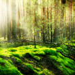 Stock Photo: Misty Old Forest