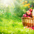 Organic Apples in Basket. Orchard. Garden — Foto de stock #14134540