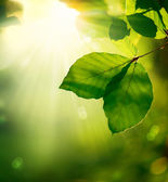 Nature Background. Green Leaves and Sunbeams — Stock Photo