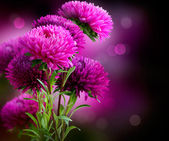 Aster Autumn Flowers Art Design — Stock Photo