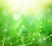 Grass with Morning Dew Drops closeup. Abstract Nature Background — Stock Photo