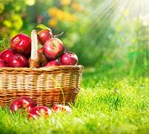 Iologiche nel cestello. frutteto. giardino — Foto Stock