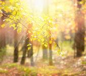 Autumn. Fall — Stock Photo