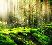 Nebligen urwald — Stockfoto