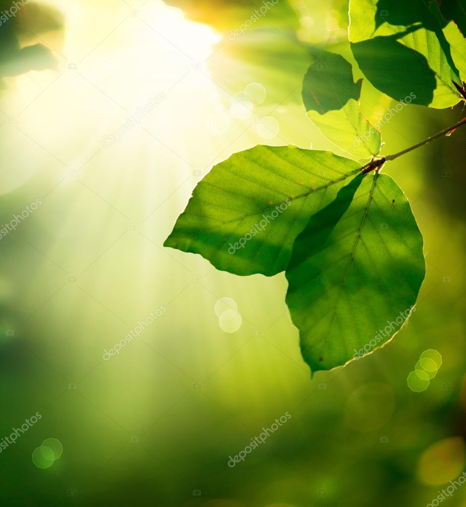 Nature Background. Green Leaves and Sunbeams   Lizenzfreies Foto #14134329