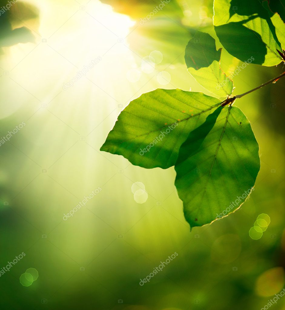 Nature Background. Green Leaves and Sunbeams  — Foto Stock #14134329