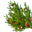 Christmas Tree Branch with Cones border isolated on a White - Stock Photo