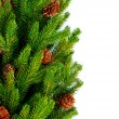 Christmas Tree with Cones border isolated on a White background — Stock Photo