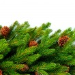 Royalty-Free Stock Photo: Christmas Tree with Cones border isolated on a White background