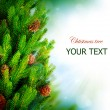 Christmas Tree Border Design over Green Blurred background — 图库照片