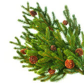 Christmas Tree Branch with Cones border isolated on a White — Stok fotoğraf