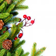 Christmas. Fir tree Border Design Isolated on white — Stock Photo