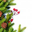Stock Photo: Christmas. Fir tree Border Design Isolated on white