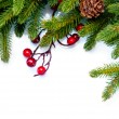 Christmas. Evergreen Fir tree Border Design — Stock Photo