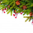 Stock Photo: Christmas Evergreen Tree Border Design. Isolated on white