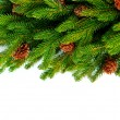 Photo: Christmas Tree Border Design Over White