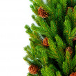 Kerstboom boordmotief over Wit — Stockfoto