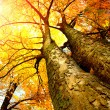 Autumn Trees. Fall — Stockfoto
