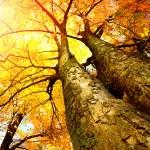 秋天的树木。秋天 — 图库照片