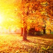 Fall. Autumnal Park. Autumn Trees and Leaves — Stock Photo