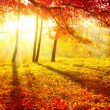 Autumnal Park. Autumn Trees and Leaves. Fall - Stock Photo