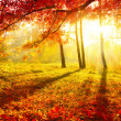 Autumnal Park. Autumn Trees and Leaves. Fall - Foto de Stock