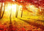 Podzimní park. podzimní stromy a listy. na podzim — Stock fotografie
