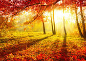 Autumnal Park. Autumn Trees and Leaves. Fall — Foto Stock