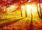 秋季的公园。秋天的树木和叶子。秋天 — 图库照片