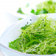 Microgreens. Healthy Green Salad. Little Sprouts. Diet — Stock Photo #21974937
