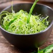 Microgreens. Healthy Green Salad. Little Sprouts. Diet — Stock Photo