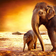 Elephant Mother and Baby outdoors - Stock Photo