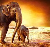 Olifanten moeder en baby buitenshuis — Stockfoto
