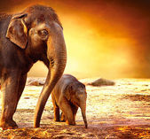 象の母親と赤ちゃんをアウトドア — ストック写真