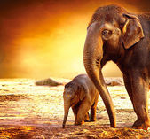 Elephant Mother and Baby outdoors — Stock Photo