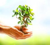 человеческие руки, держа зеленое растение на фоне природы — Стоковое фото