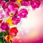 Spring Flowers. Tulips Border Art Design — Stock Photo