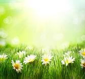 Prado primavera com margaridas. fronteira de grama e flores — Foto Stock