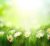 Spring Meadow with Daisies. Grass and Flowers border — Foto Stock