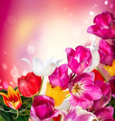 Spring Flowers. Tulips Border Art Design — Stock Photo