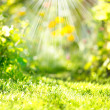 Nature Spring Blurred Background with Sunbeams — Stok fotoğraf