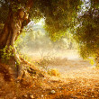 Old Olive Tree — Stockfoto #29984005
