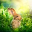 conejo. diseño de arte de lindo conejito de Pascua en el Prado — Foto de Stock