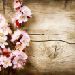 Spring Blossom over wood background — Stock Photo #29985089