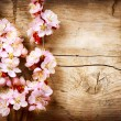Spring Blossom over wood background — Stock Photo