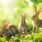 conejos. diseño de arte de conejitos de Pascua poco lindo en el Prado — Foto de Stock