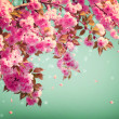Sakura Flowers Background art Design. Spring Sacura Blossom  — 图库照片