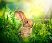 Rabbit. Art Design of Cute Little Easter Bunny in the Meadow — Stock Photo